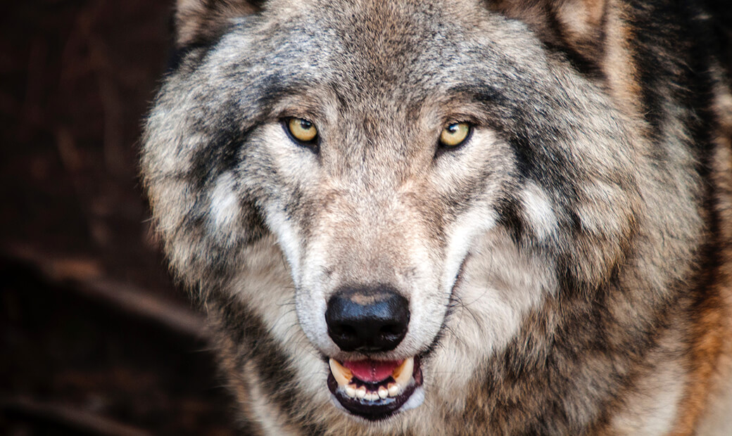 A Wolf in Sheep's Clothing | Technology news from Windermere, Cumbria - Iosys